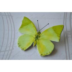 Pross heleroheline liblikas