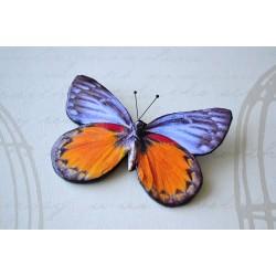 Pross lilla-oranž liblikas