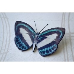 Pross valge-sinine liblikas