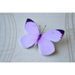 Pross roosa liblikas