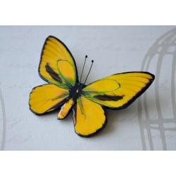 Pross kollakas-roheline liblikas